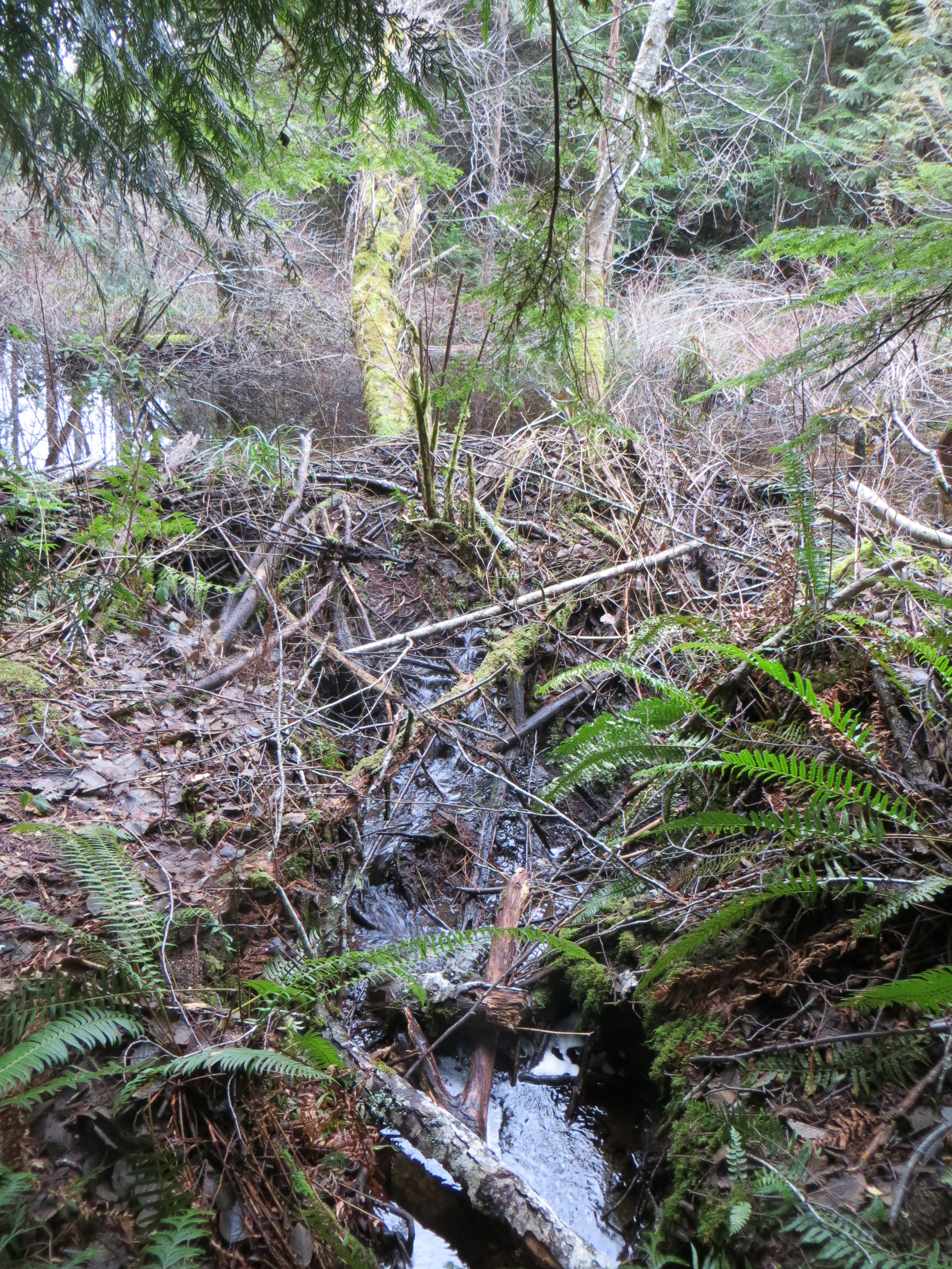 Septic or animal pollution illahee for Kitsap septic