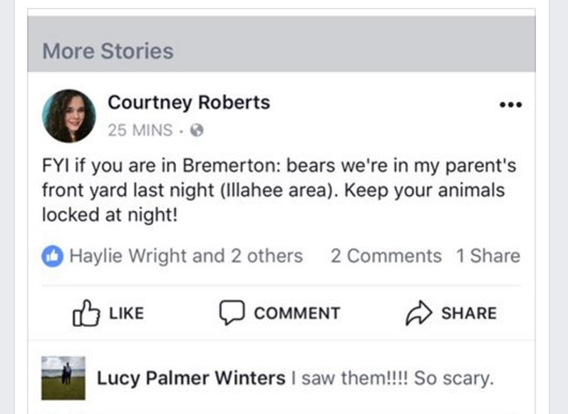 Facebook bear report